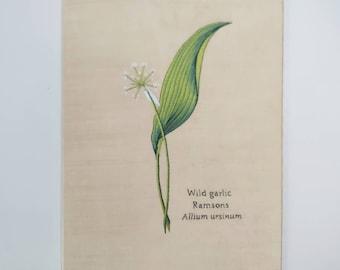 Hand embroidered silk wild garlic