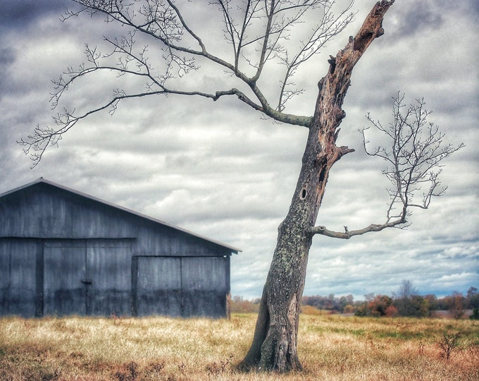 Photography, Snaggly Old Tree On The Farm, 11 x 14 Inch Photographic Print