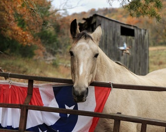 Photography, The Horse At J. Wheeler Holler, Horse Print, 11 x 14 Inch Photographic Print