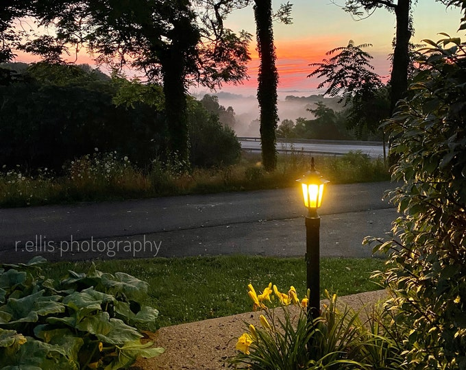 Photography, Tropical Scene In Kentucky, 11 x 14 Inch Photographic Print