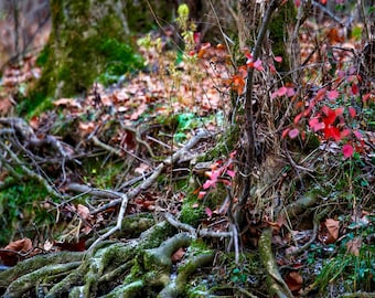 Photography, Landscape Print, Title: Scary Woods Along Caney Fork Creek