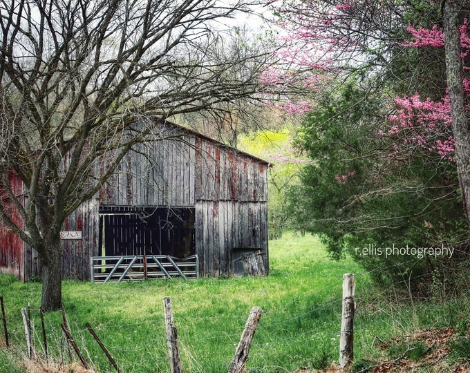 Reserve Listing For Sherry, Photography, Spring Arrives In Kentucky, 24x36 Canvas Print, Old Barn Pic