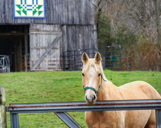 Photography, Horse By The Quilted Barn, 11 x 14 Inch Photographic Print