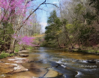 Photography, Wall Decor, Landscape Print, Arrival Of Spring In Kentucky, 11 x 14 Photographic Print