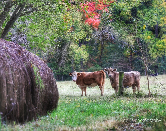 Photography, Primitive, Fall On A Kentucky Farm, 11 x 14 Inch Photographic Print