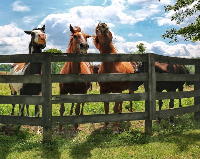 Photography, Horsing Around in Adams County Ohio, 11 x 14 Inch Photographic Print