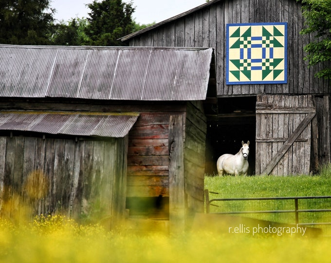 Photography, The Barn Quilt, Yellow Wild Flowers, and The Lone White Horse, 11 x 14 Inch Photographic Print
