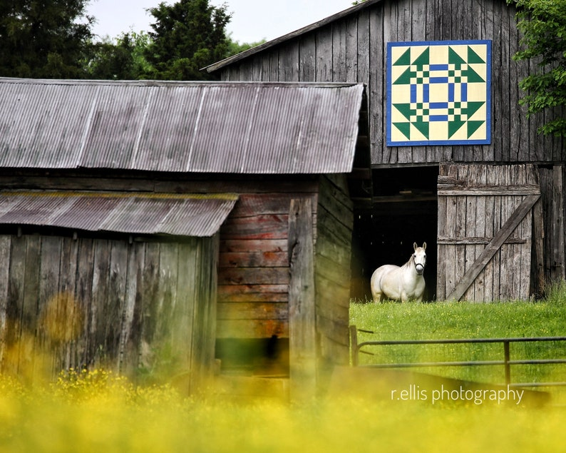 Photography The Barn Quilt Yellow Wild Flowers and The Lone image 0
