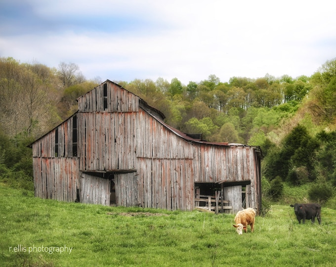 Wall Decor, Photographic Print, Country Scene In Kentucky, 11 x 14 Inch Print