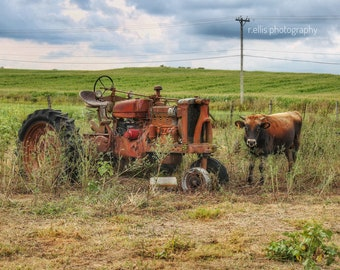 Photography, The Jersey Bull And Old Farmall Tractor, Near Stanford Kentucky, 11 x 14 Inch Photographic Print