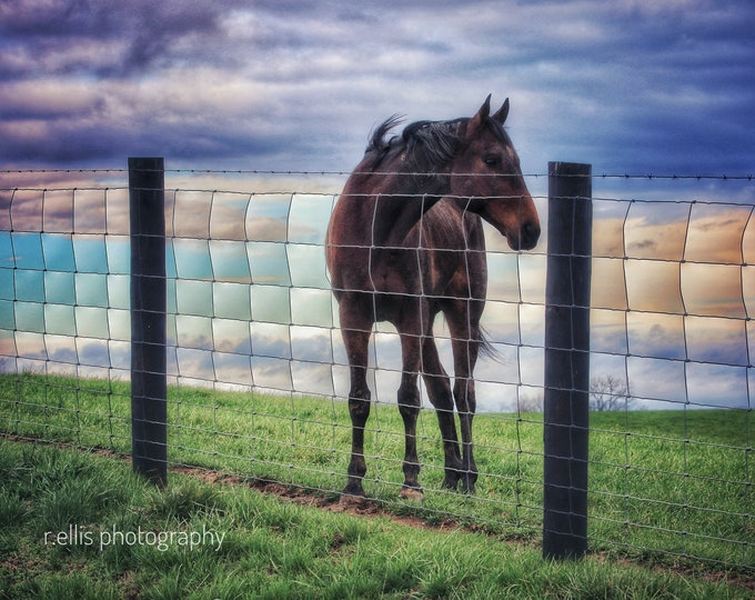 Photography, Horse Photography, Farm Scene, Title: High Plains Horse of Fleming County, 11 x 14 Inch Photographic Print