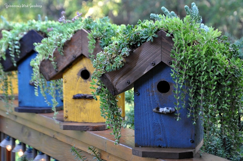 Diy Living Roof Birdhouse Succulent Birdhouse Green Roof Birdhouse Planter Wooden Birdhouse Painted Birdhouse Outdoor Birdhouse