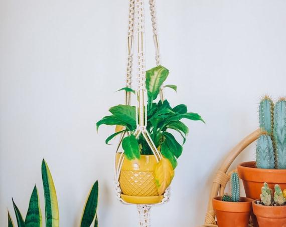 Paxton Plant Hanger