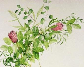Proteus Botanical