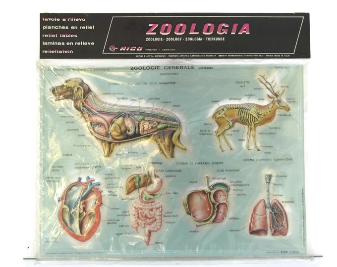 Vintage Animal Anatomy Educational Zoological School Chart. Made in Italy. Rico 3D Relief Table. Kids Room Science Decor. Gifts For Geeks.