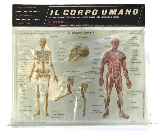 Vintage Human Anatomy Educational School Chart. Made in Italy. Rico 3D Relief Table. Kids Room and Science Decor. Gifts For Geeks.