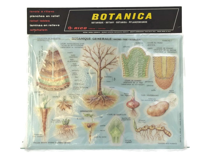 Vintage Educational Botanical School Chart by Rico Made in Italy. 3D Relief Table. Kids Room and Science Decor. Gifts For Geeks.