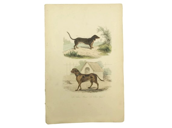 Antique French Dog Art Print, Natural History Engraving, Animal Illustrations, Dog Lover Decor & Gifts