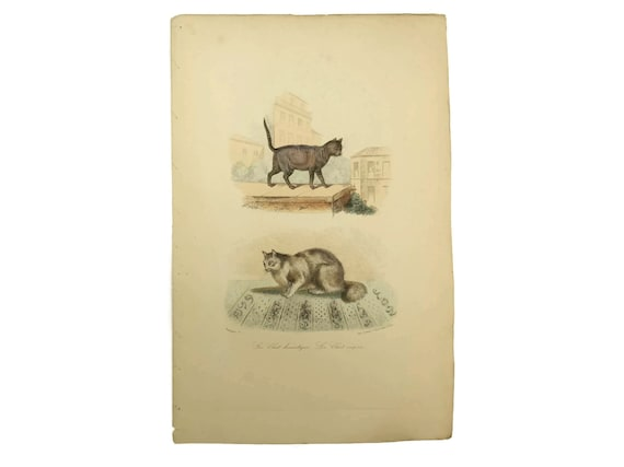 Antique Cat Art Print.