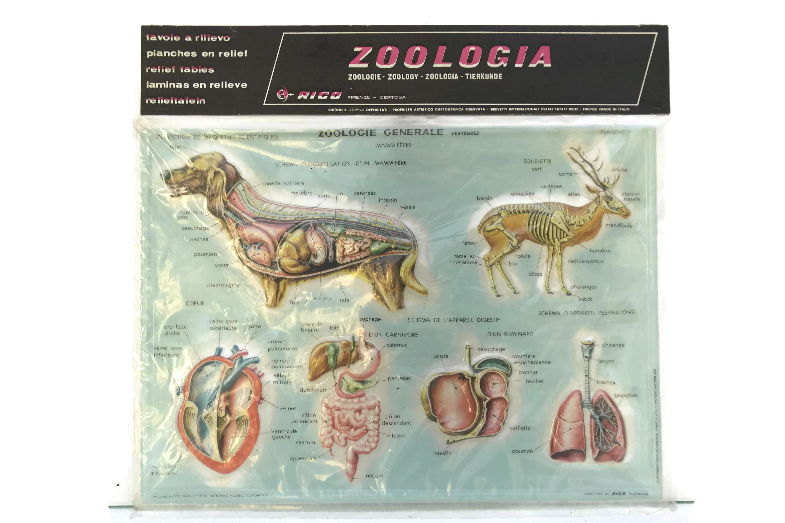 Vintage Animal Anatomy Educational Zoological School Chart. Made in ...