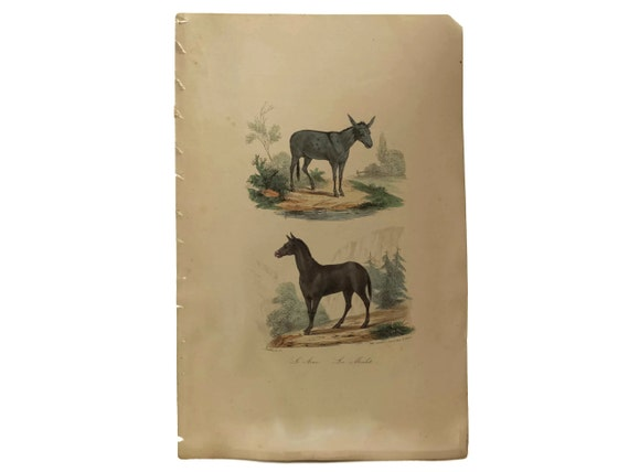 Antique French Donkey and Mule Art Print
