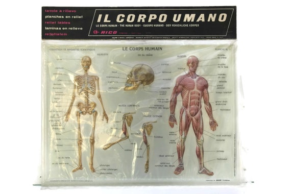 Vintage Human Anatomy Educational School Chart, Rico 3D Relief Table Made in Italy, Kids Room and Science Decor, Gifts For Geeks