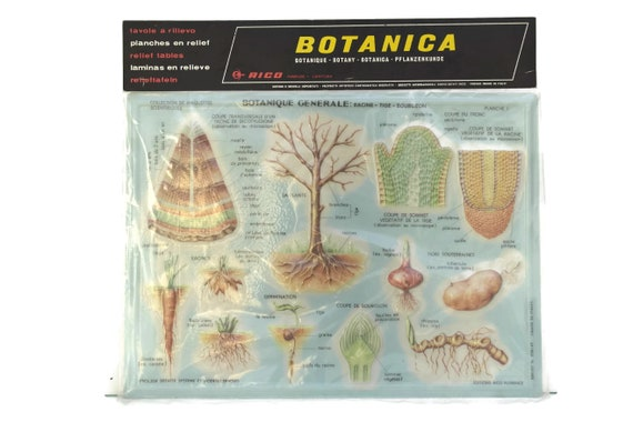 Vintage Educational Botanical School Chart, 3D Relief Table