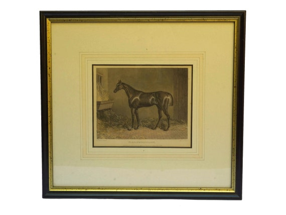 Antique Plenipotentiary Race Horse Engraving, Equestrian Wall Decor