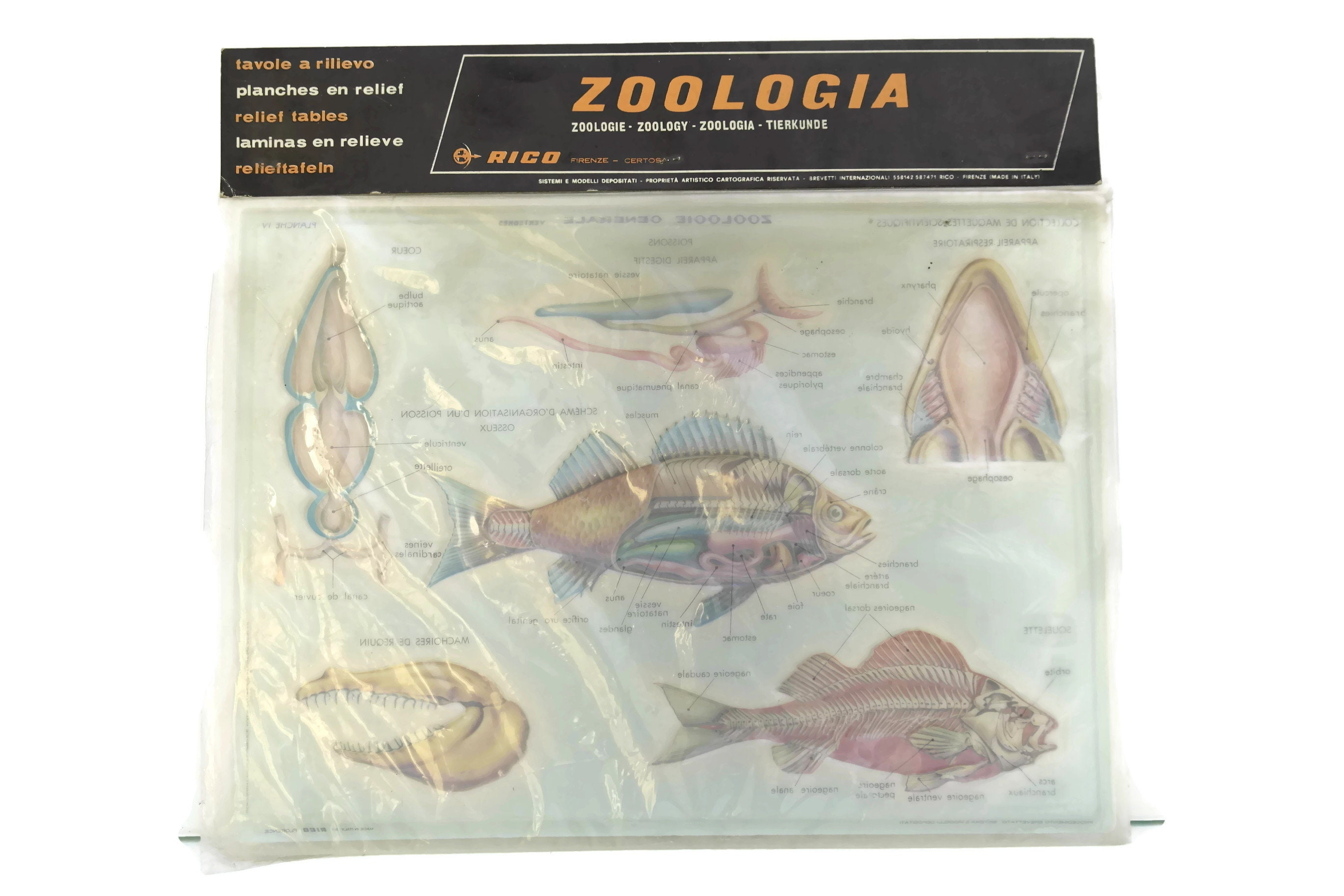 Vintage Fish Anatomy Educational Zoological School Chart. Made in ...