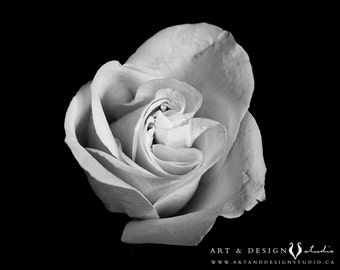 Black and White Fine Art Flower Photograph, White Rose Photo, Large Art Print, BW Photograph, Bedroom Print, Canvas Wall Art, White Floral