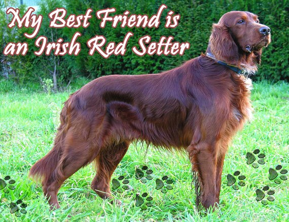 AD-RS53lymK Irish Red Setter Puppies /'Love You Mum/' Photo Keyring Animal Gift