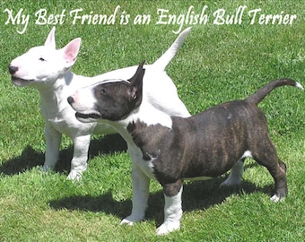 My Best Friend is an English Bull Terrier  Fridge Magnet 7cm by 4.5cm