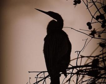 Dark Bird Photographic Print