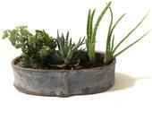Succulent Container Garden. Windowsill Garden. Minimalist Home Decor. Ceramic Planter. Indoor Zen Garden. Pottery Planter