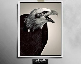 Águila de fotografía, fotografía de aves rapaces, fotografía de naturaleza