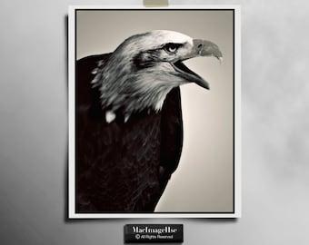 Eagle Photograph , Bird of Prey Photography , Nature Photography