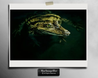 Reptile, Paleosuchus trigonatus,Photography Print,Nature,Wall Art,10x8