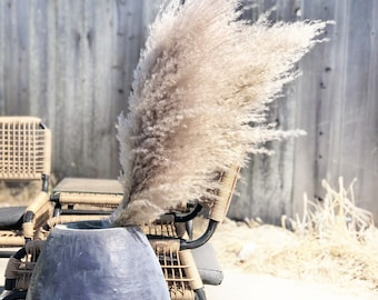 Extra Large Fluffy Natural Dried Pampas Grass single stem decor