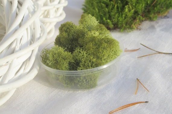 Green Preserved Reindeer Moss Natural Craft Supply Indoor Etsy