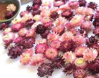 100 pcs Dried Strawflowers, heads,Dried flowers Florist supply Potpourri Craft supply Home decor DIY Wedding table decor, Pink