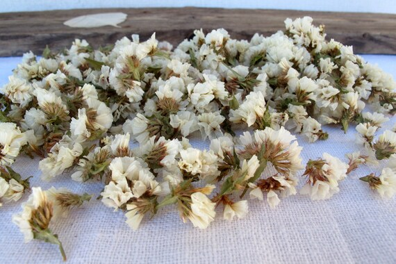 Dried White Flowers For Crafting Small Potpourri Flowers Etsy