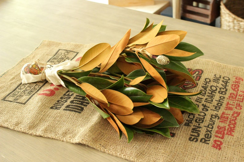 Fresh Magnolia Tips image 0