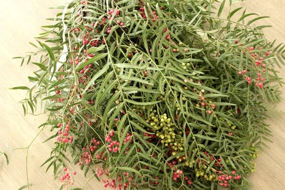 Fresh Hanging Pepperberry 5 Stems Etsy
