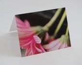 Pink Floral All Occasion Note Cards