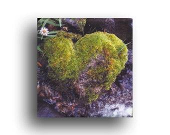 "Moss Heart Rock, Mini Valentine canvas print, 4.5"" square"