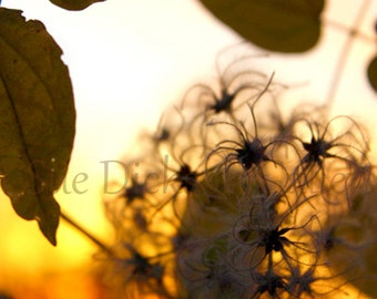 Foliage in Sunset Fine Art Photography