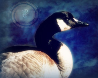 Beauty, The elegance of the goose set in a blue background with texture