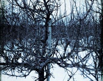 Art, Photography, Wall Art, Nature, Home Decor,Fine Art Print, Snow Clouds,White, Winter,Grand Rapids,Michigan.Winter,Winter Print,Snow Art,