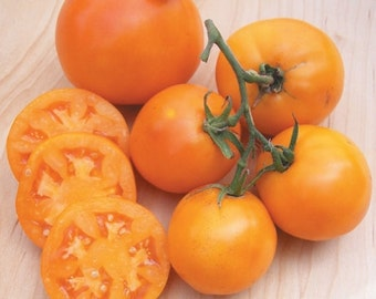 VTH) AMISH GOLD Slicer Tomato~Seeds!!~~~~~A Real Producer!