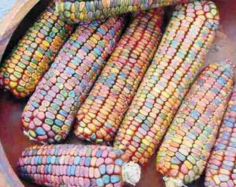 VCOO)~EARTH TONES Dent Corn~Seeds!!~~~~Lots of Pastels!